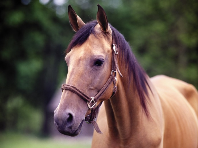 Horse Toture
